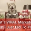 The Top 11 Branded Viral Videos of 2013
