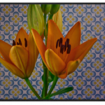 This Time-Lapse Captures the Beauty of 21 Kinds of Flowers Blooming