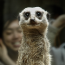 Why Meerkat and Periscope Are the Biggest Things Since, Well, Twitter